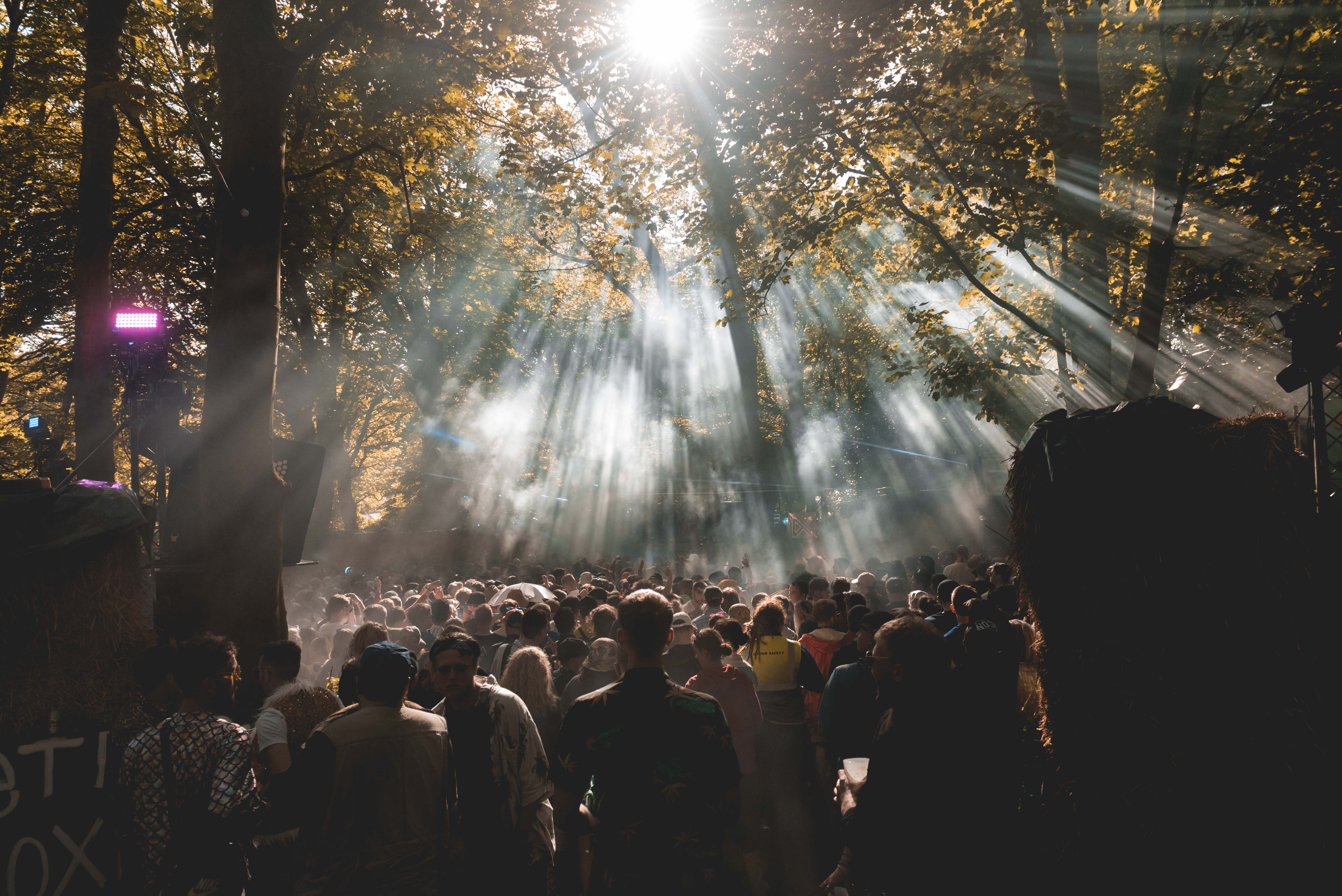 sunlight through the trees at Seth troxler gottwood